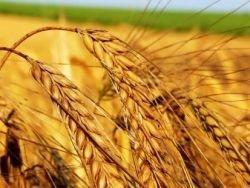 Украина: Новый терминал для казахстанского зерна