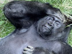 Мужчина должен быть чуть симпатичнее обезьяны?