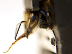 Пчёлы-узники покажут язык террористам