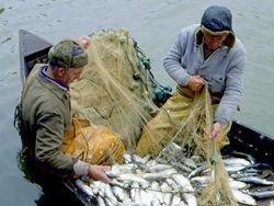Таможенный сбор за выловленную в РФ рыбу могут отменить