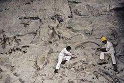Человечество может повторить судьбу динозавров?