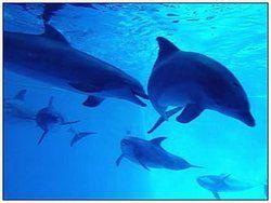 Установлено: дельфины используют дипломатию в общении