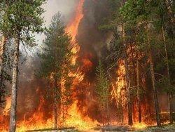 Иркутская область борется с волной таёжных пожаров