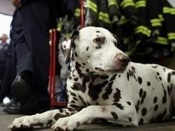 Француз получил тюремный срок за расправу над собакой