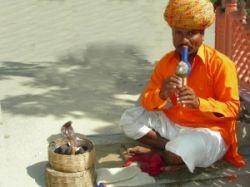 Вся правда о культе змеи в Индии