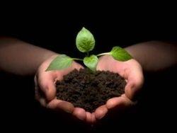 ООН прочит Украине прорыв в сельском хозяйстве