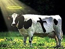В Южной Корее клонировали корову редкого вида