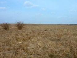 Астрахани, Дагестану и Калмыкии грозит опустынивание