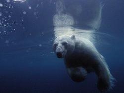 В Арктике ускорилось таяние льдов