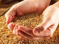 В Казахстане соберут самый плохой урожай  за 10 лет
