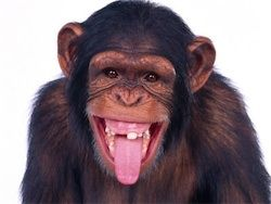 Негры произошли от горилл, а белые - от шимпанзе!