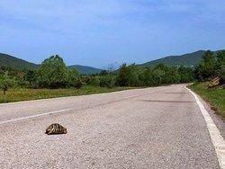 Водителей в США просят уступать дорогу черепахам