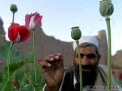 Афганская наркоугроза в полный рост