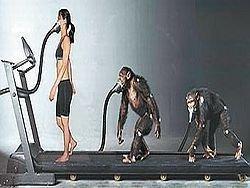 Еще одна черта сходства между человеком и обезьяной