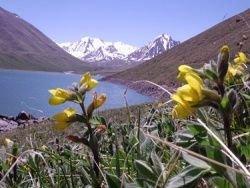 В Киргизии начался передел собственности
