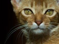 На убийцу бездомной кошки завели уголовное дело