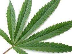 В Швейцарии могут легализовать продажу марихуаны