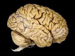Ученые нашли области мозга, отвечающие за кураж
