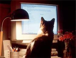 Технологии: Кот в бионических сапогах