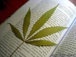 В Казани сожги 700 кг марихуаны