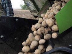 Создали батарею на основе вареного картофеля