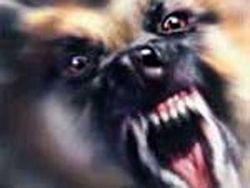 От бродячих собак спасут  осторожность и ДЕЗ