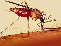 Малярия мигрировала из Африки 60.000 лет назад