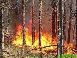В республике Марий Эл полыхают леса