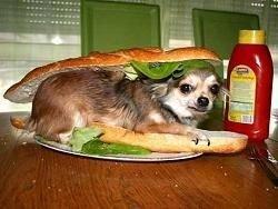 Власти признали, что россияне недоедают