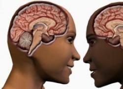 Ученые установили срок жизни зависит от размера мозга