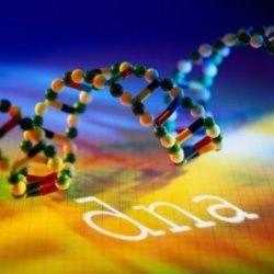Появление таблеток для ДНК не за горами