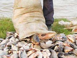 Браконьеры продают тонны российской рыбы японцам