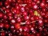 Купить замороженные лесные ягоды! - клюква могут быть даже питательнее свежих.