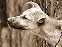 Куда уходят собачьи миллионы?