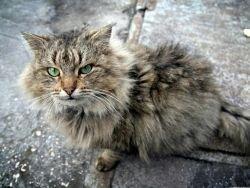 В России началась волна репрессий против котов