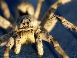 Преподаватель съел паука для привлечения спонсоров
