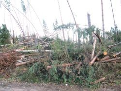 В Новгородской области ураган обернется пожарами