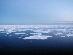 """Экологи не пускают """"Роснефть"""" и BP в Арктику"""