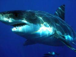 Акулам отказали в умении различать цвета