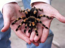 Задержанный за контрабанду в США пауков признал вину