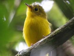 В интернете появилась база данных с пением тысяч видов птиц