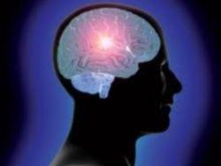 Тайна в черепной коробке: о человеческом мозге