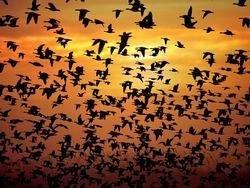 Десятки мертвых птиц найдены в Китае