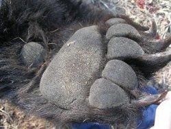 Одобрено решение вокзала в Перми в виде медвежьей лапы