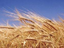 РФ, Украина и Казахстан вернутся к идее создания зернового пула