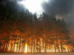 О лесных пожарах в СССР и РФ: ощутите разницу