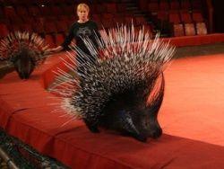 Греки хотят запретить цирковых животных