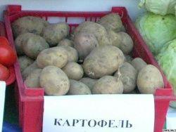 Картофель может подешеветь втрое