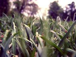 """""""Сонные травы"""" - лучшее средство от бессонницы"""