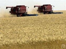 В РФ прогнозирует прирост сельского хозяйства на 20%